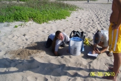 digging up sea turtle eggs